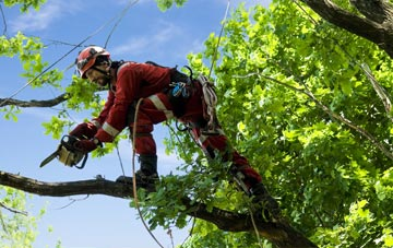 find trusted rated High Wycombe tree surgeons in Buckinghamshire