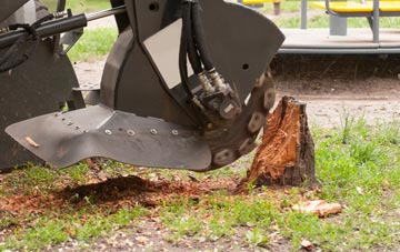 professional High Wycombe stump grinding services