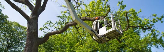 High Wycombe tree surgery services