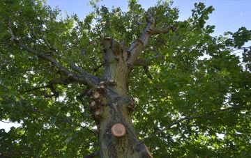 what is High Wycombe tree surgery?