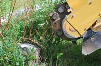free High Wycombe tree stump grinding quotes