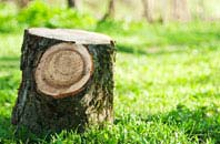 High Wycombe tree stump removal services