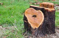 free High Wycombe tree stump removal quotes